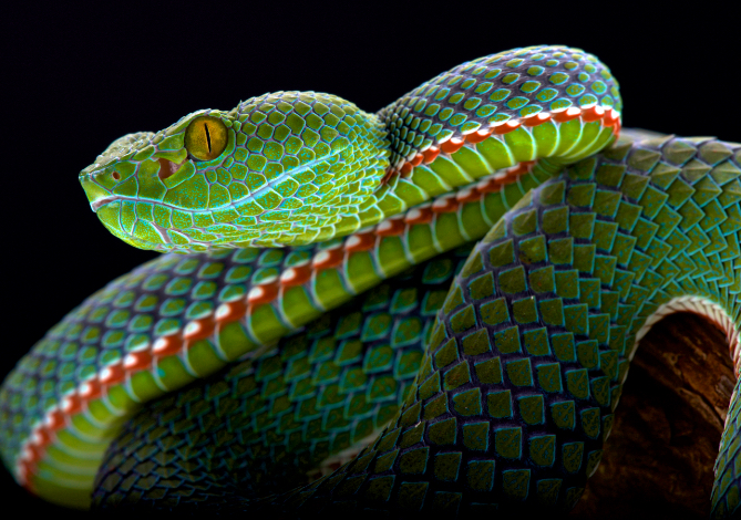 snake-green-lightblue-blue-reptile-animal-photography-cold-instinct