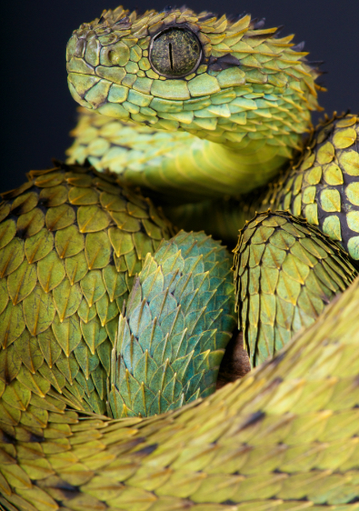 snake-green-reptile-animal-photography-cold-instinct