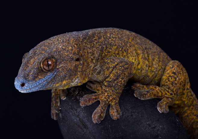 brown-reptile-animal-photography-cold-instinct