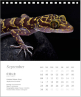 reptiles-animal-photography-cold-instinct-calendar