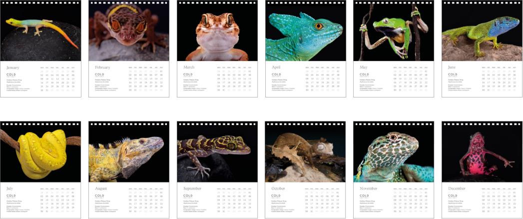 green-lightblue-blue-reptiles-animal-photography-cold-instinct-calendar