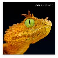 snake-orange-reptile-animal-photography-cold-instinct
