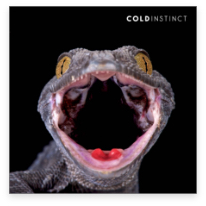 reptile-animal-photography-cold-instinct