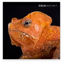 orange-reptile-animal-photography-cold-instinct