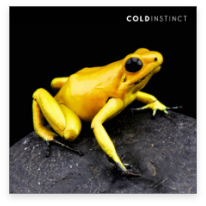 frog-reptile-yellow-animal-photography-cold-instinct